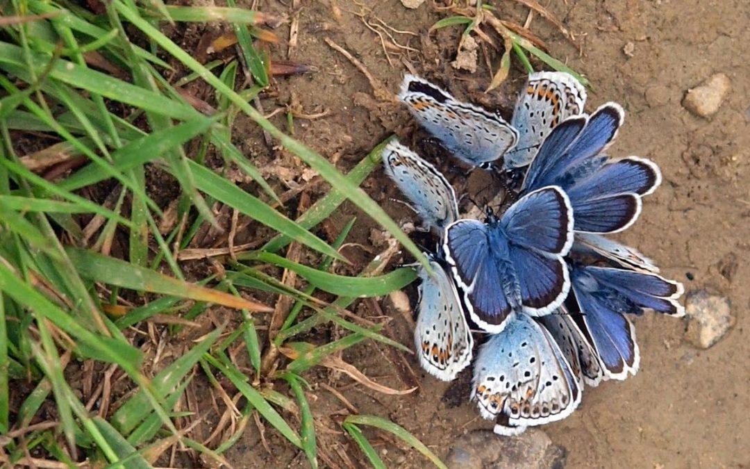 ¿Cómo se decide dejarlo «todo» para ir en busca de mariposas?