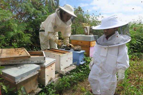 Alpispa – Nos envolvemos con el zumbido de las abejas